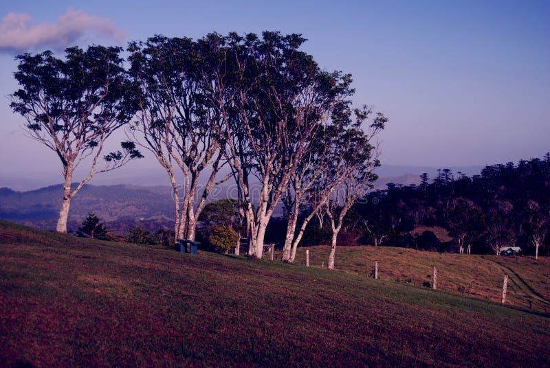 Coastline Australia_. Morning at a beautifull bushland at Coastline Australia royalty free stock image