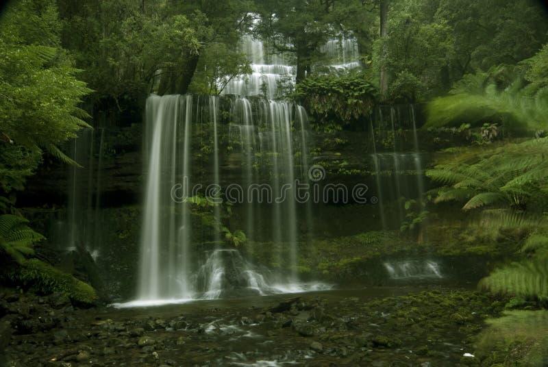 Coastline Australia_Russell Falls_0331. Russell Falls at Coastline TAS Australia, Forest bushland Australia royalty free stock image