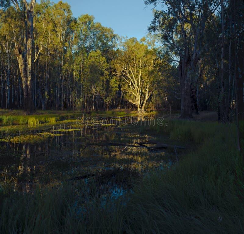 Coastline Australia. Sunset at bushland in Coastline Australia stock photos