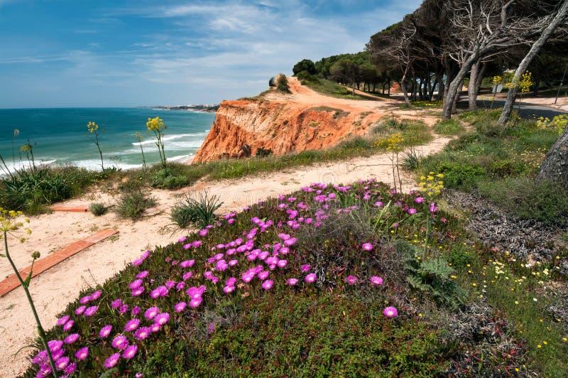 Coastline at Ohos de Aqua, Southern Portugal. Coastline at Ohos de Aqua near Albufeira, Algarve, Portugal in spring with Hottentot Fig (Carpobrotus edulis) stock photos