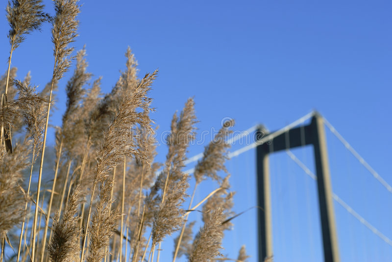 Coastline reed and bridge royalty free stock image