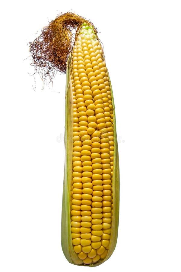 Cob isolated stock image