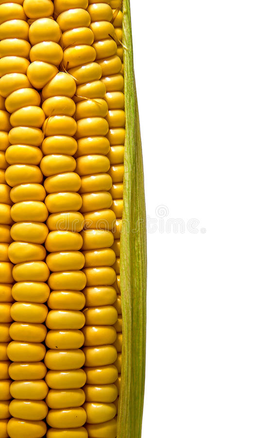 Cob isolated stock photo