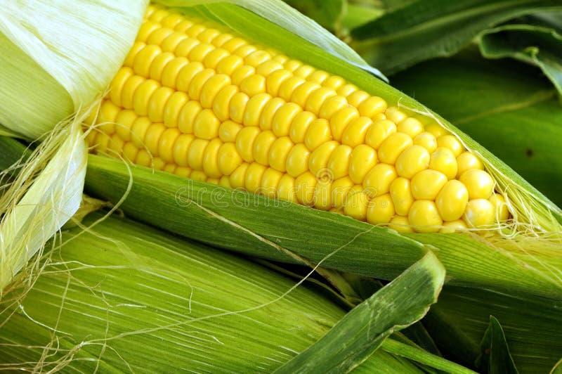 Download Cob kukurudza zdjęcie stock. Obraz złożonej z plewa, stos - 11730038