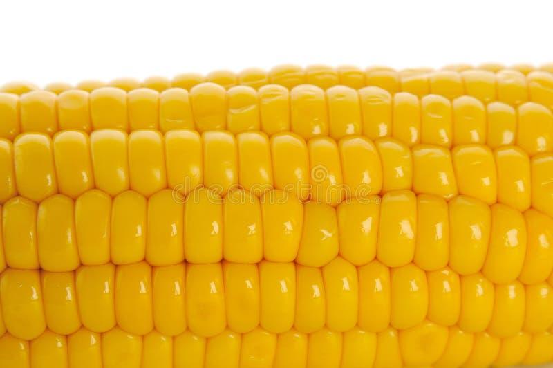 Download Cob kukurudza zdjęcie stock. Obraz złożonej z vite, rolnictwo - 13335560