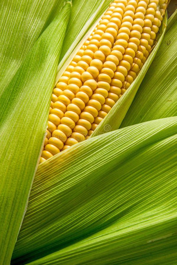 Cob between leaves stock images