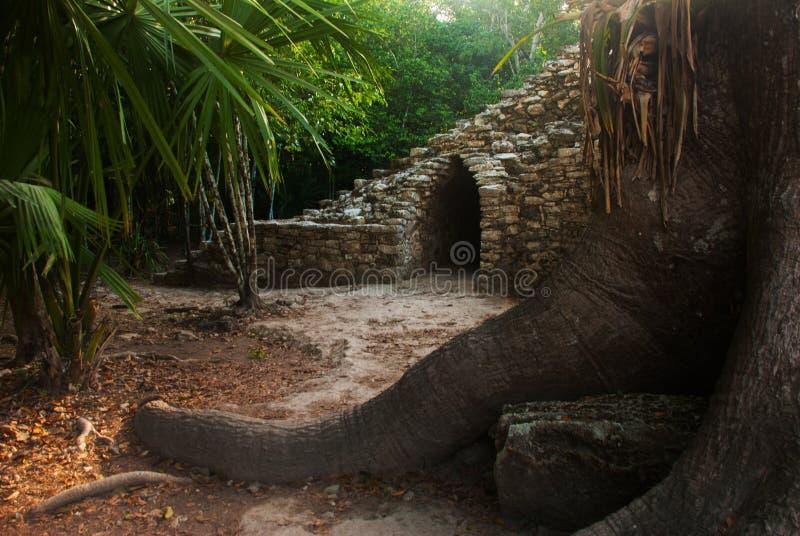 Coba, México, Iucatão: Complexo arqueológico, ruínas e pirâmides na cidade maia antiga fotos de stock