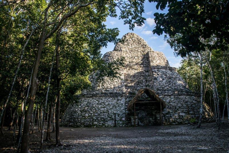 Coba Maya Ruins in Mexico Yucatan inside the jungle. Coba Maya Ruins in Mexico at Yucatan Pyramid inside the jungle royalty free stock photos