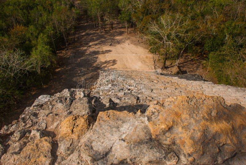 Coba, Mexico, Yucatan: hoogste mening van de wildernis van de grote piramide van Coba Nohoch Mul stock fotografie