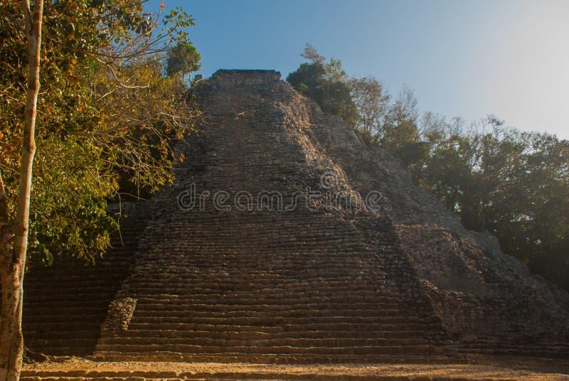 Coba, Mexico, Yucatan: Mayan Nohoch Mul pyramid in Coba. Upstairs are 120 narrow and steep steps. stock images