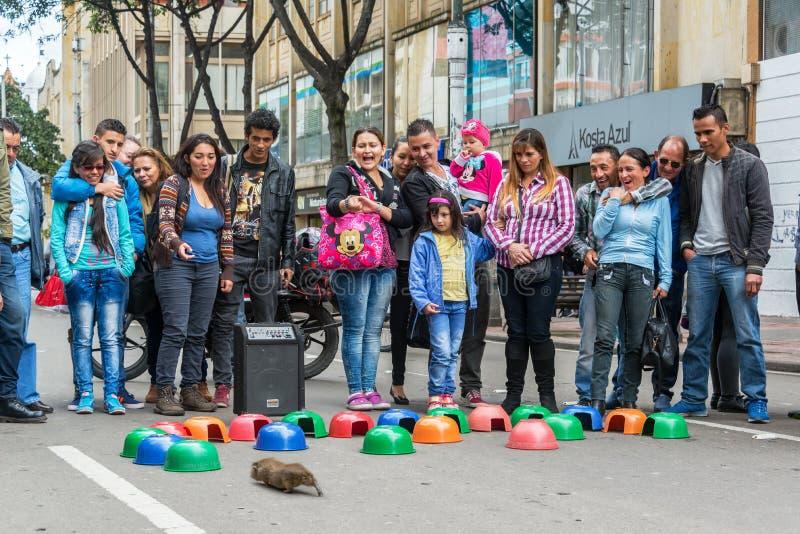 Cobaye emballant à Bogota photographie stock
