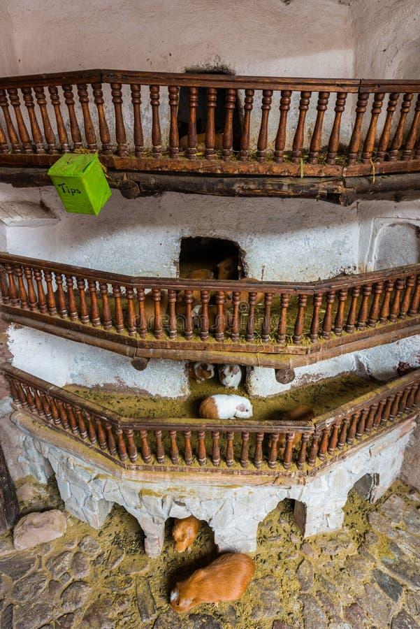 Cobayes Pisac les Andes péruviens Cuzco Pérou photo libre de droits