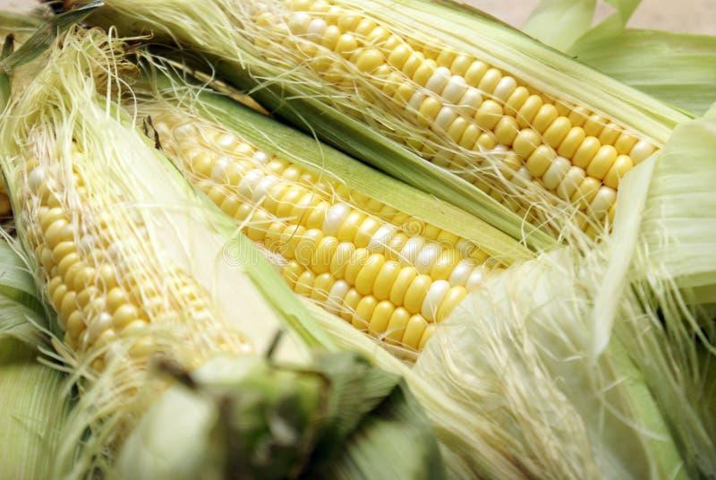 cobb玉米 免版税库存照片
