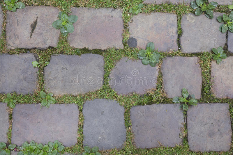 Cobble stones on a Prague street. Old dirty cobble stones with grass, Prague, background stock photos
