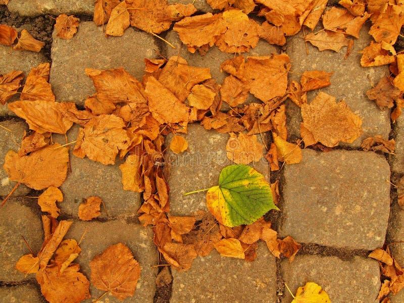Cobble van het de herfstpark steenvoetpad met droge oranje lindeboombladeren, kleurrijk blad royalty-vrije stock afbeeldingen