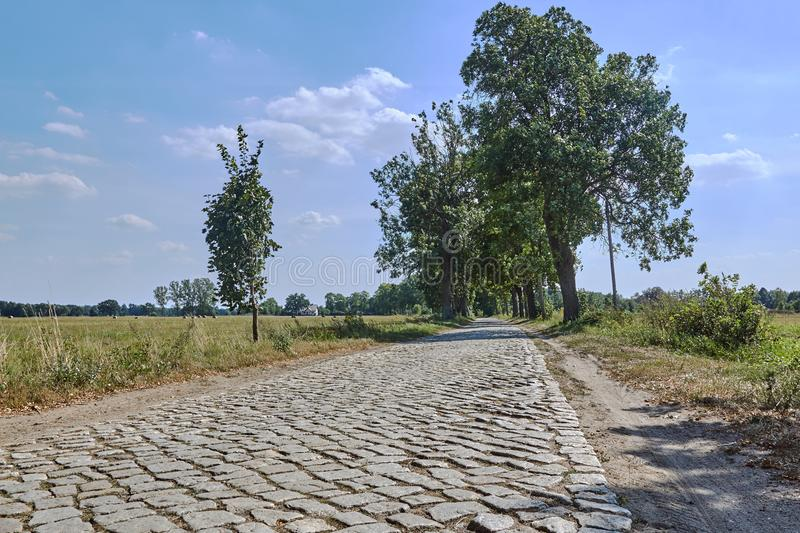 A cobbled country road shaded by trees during summer stock photos