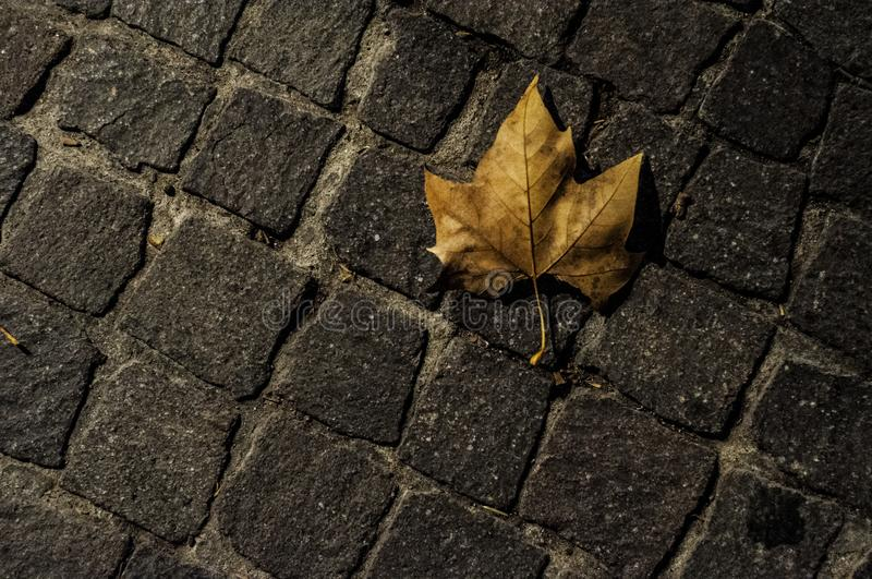 Cobbles and dead leaf at night stock photography