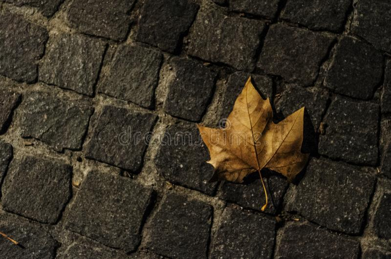 Cobbles and dead leaf at night stock photos