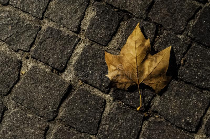 Cobbles and dead leaf at night royalty free stock image