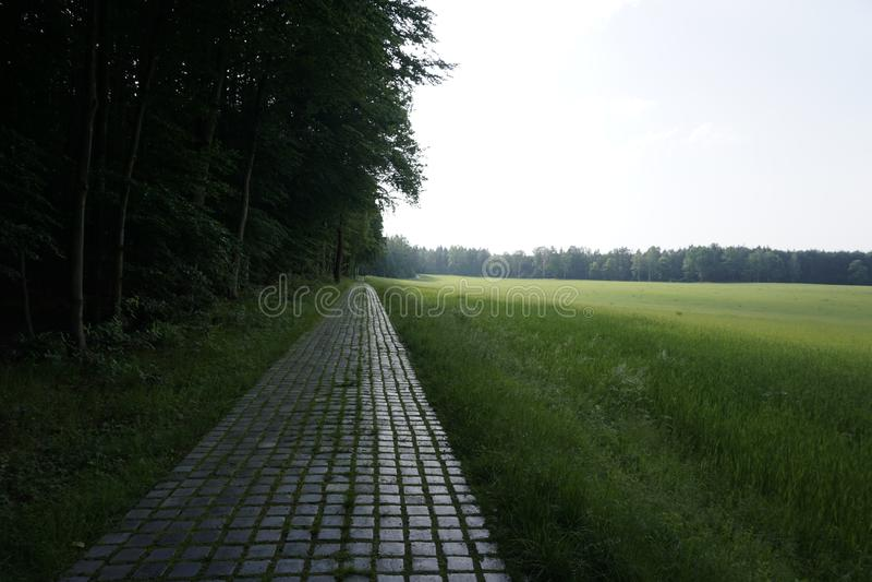 Cobblestone country lane near the Lilienstein mountain in Saxon Switzerland. Germany stock photos