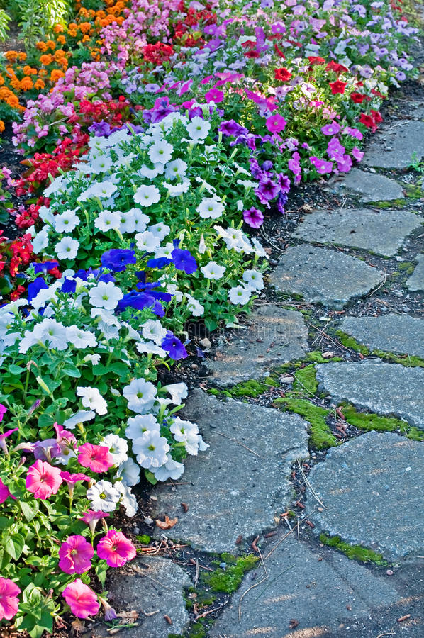 Free Cobblestone Path With Bedding Flowers Stock Images - 22919004
