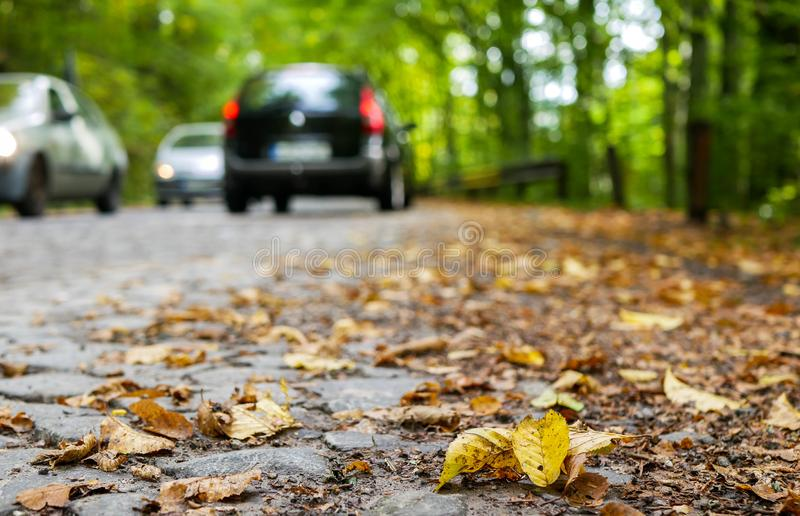 Cobblestone road at early autumn in the deciduous woods, passing cars in the background. Focus on the yellow beech leaves stock image