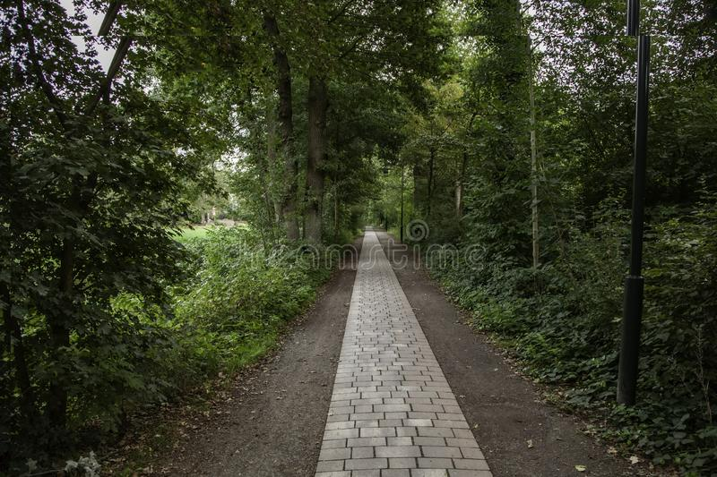 Cobblestone road in the forest stock photos
