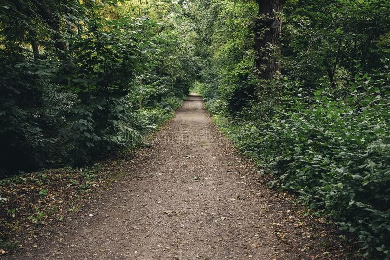 Cobblestone road in the forest royalty free stock image
