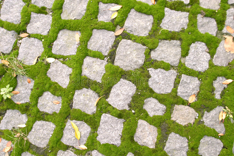 Cobblestone Texture royalty free stock image