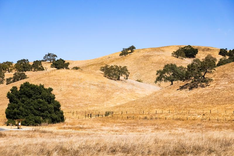 Coberta Rolling Hills da grama seca, lago coyote - Harvey Bear Park, área de San Francisco Bay sul, Gilroy, Califórnia foto de stock royalty free