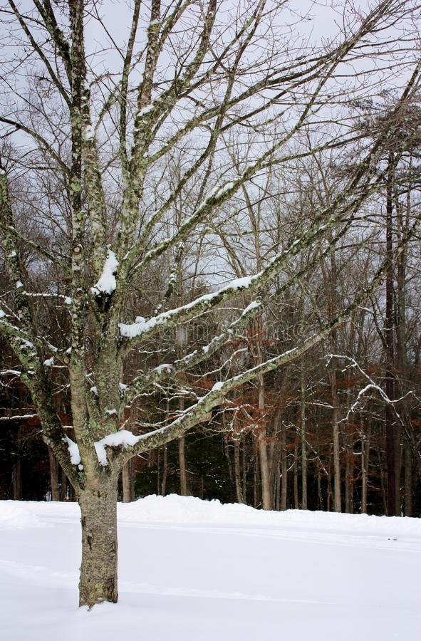 Coberto de neve fotografia de stock royalty free