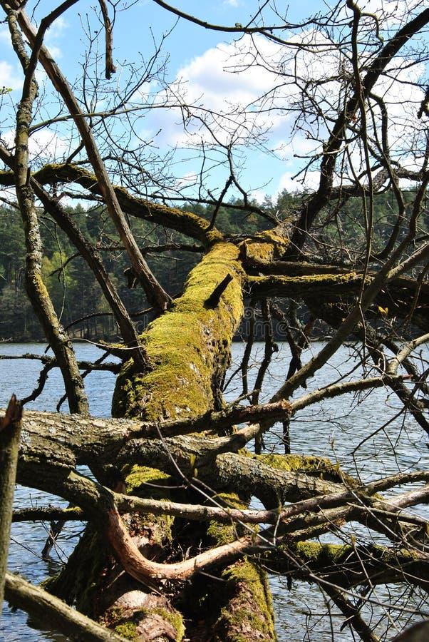 Coberto de vegetação com a árvore quebrada do musgo fotografia de stock