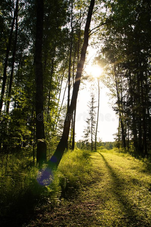 Coberto de vegetação com o trajeto de floresta da grama iluminado pelo sol imagem de stock royalty free