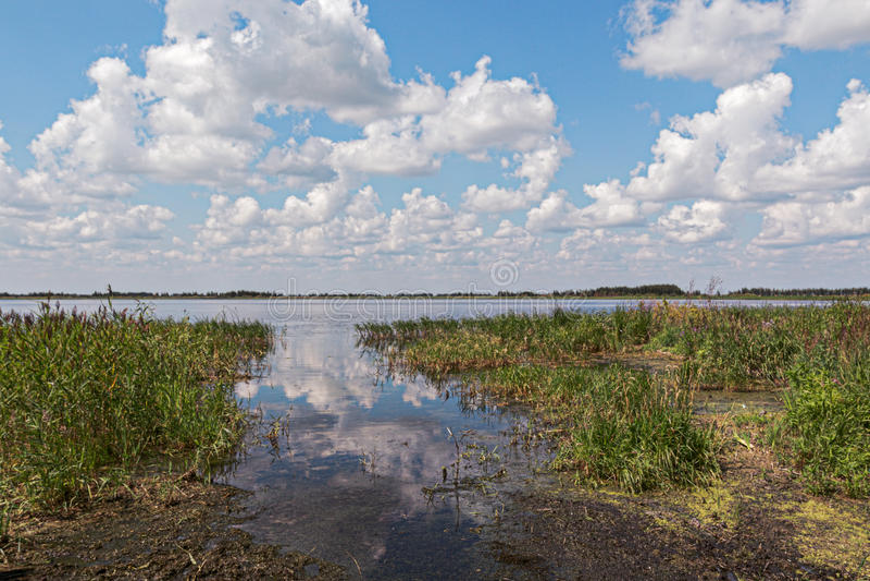 Coberto de vegetação com os juncos, costa do lago fotografia de stock royalty free
