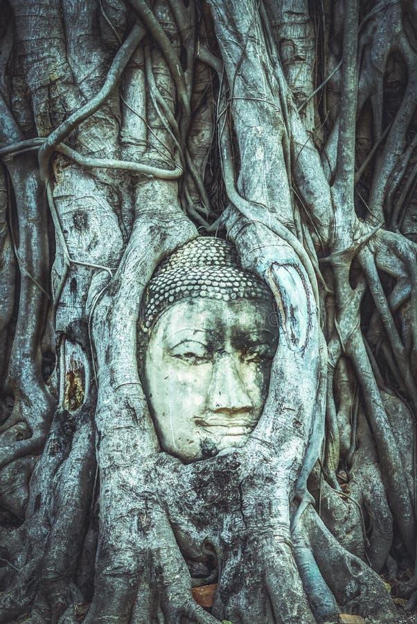 Coberto de vegetação principal da Buda pela árvore de figo em Wat Mahathat Parque histórico de Ayutthaya, efeito do vintage foto de stock royalty free