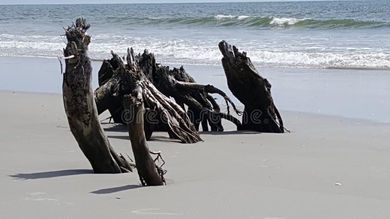 Cobertura das árvores pelo surf imagens de stock