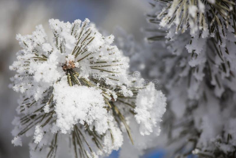 Cobertura macia do inverno foto de stock