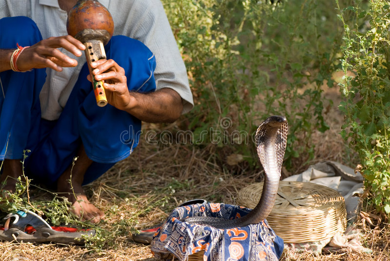 Cobra. Indian snake charmer playing on flute royalty free stock photography