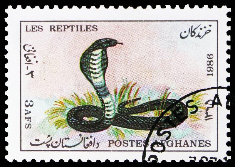 Cobra del capo (nivea) del Naja, serie degli animali, circa 1986 fotografie stock