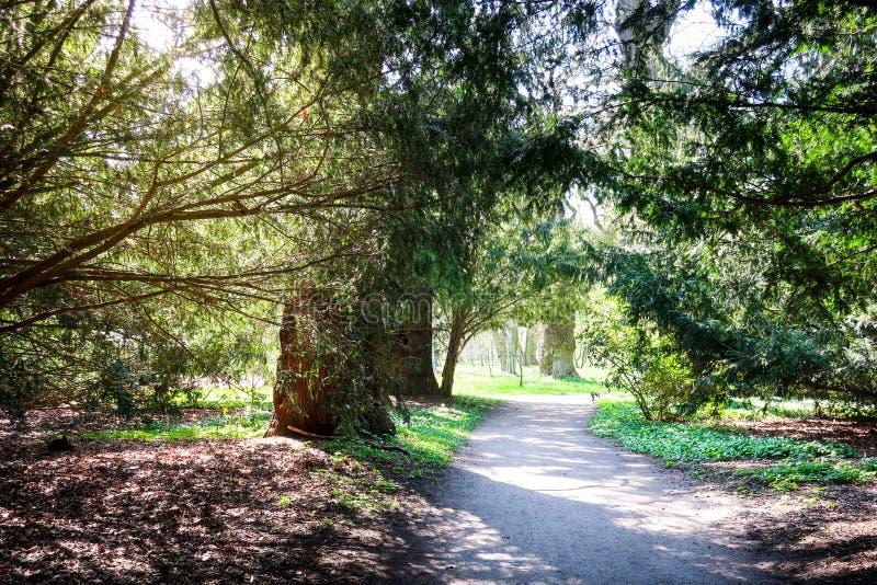 Cobrir a estrada através de um túnel feito das árvores em um parque verde ensolarado imagem de stock
