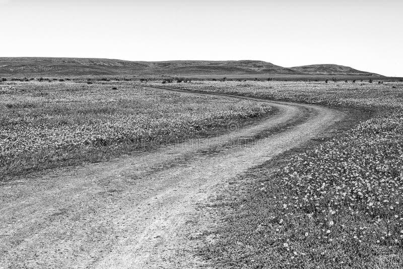 Cobrir a estrada no campo dos wildflowers na exploração agrícola de Matjiesfontein monocromático imagem de stock