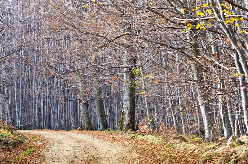 Cobrir a estrada secundária através da floresta densa bonita no outono atrasado, montanhas de Homolje foto de stock royalty free