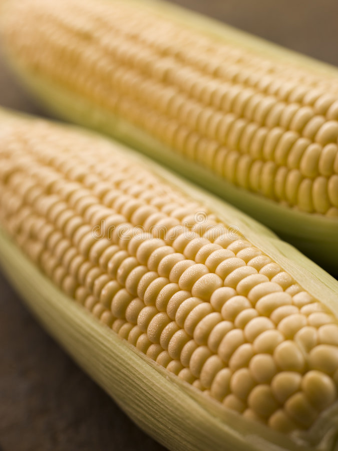 Cobs Of Corn royalty free stock photography