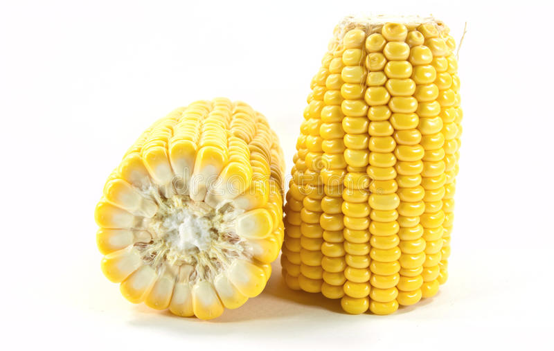 Cobs of sweet corn. On white background royalty free stock image