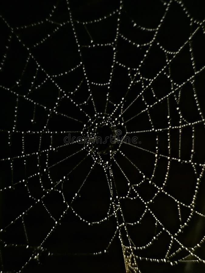 Cobweb με σταγόνες βροχής στοκ φωτογραφία με δικαίωμα ελεύθερης χρήσης