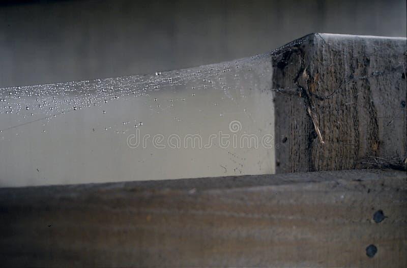 Cobweb stock image