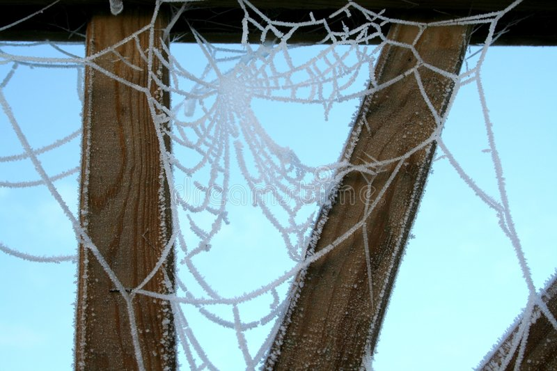 Cobweb 2 royalty free stock photography