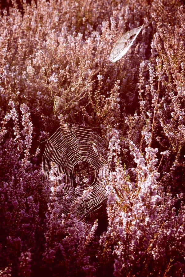 Download Cobweb stock image. Image of blossoms, flora, culture - 26516939