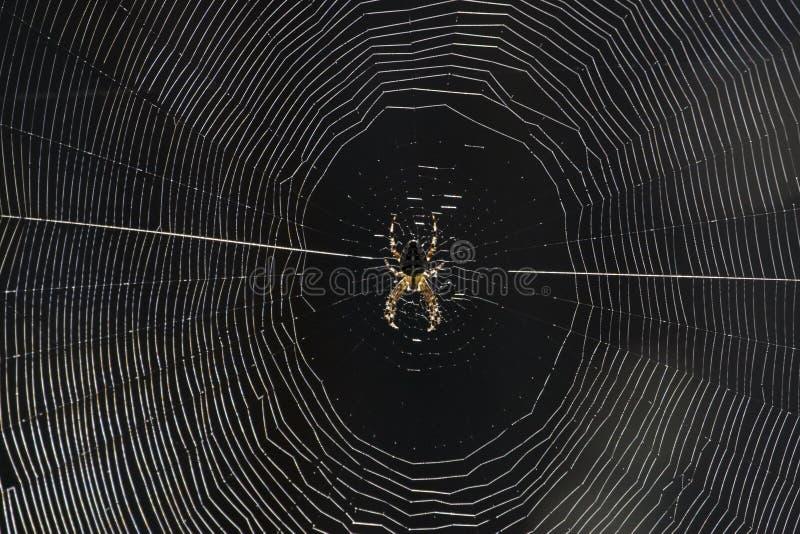 Download Cobweb stock photo. Image of araneidae, flora, area, diadematus - 27660360
