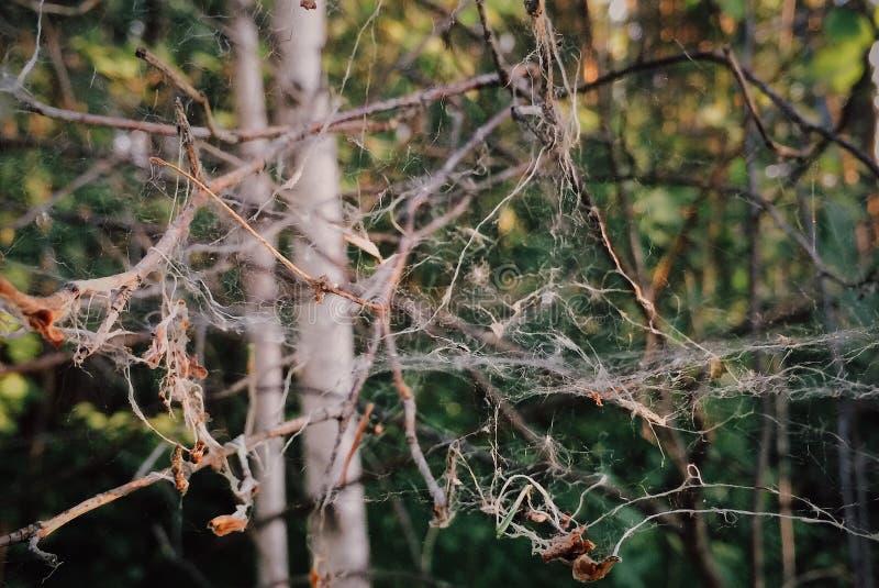 Cobweb royaltyfria foton